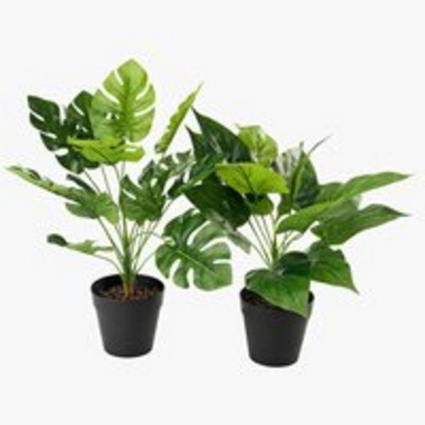 Aanbieding van Kunstplant THORULF H30cm assorti voor 3€
