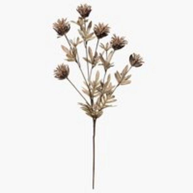Aanbieding van Kunstbloem LAVRITS H68cm bruin voor 3€